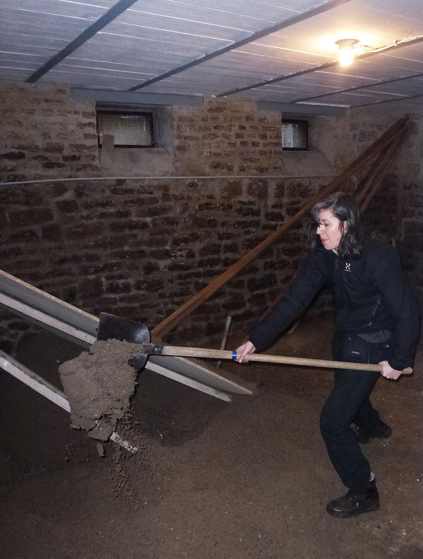 Sanierung Hauskeller